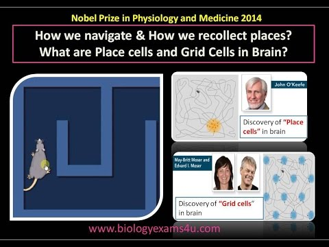 What are Place cells and Grid Cells in Mind? Nobel Prize in Physiology and Drugs 2014 spelled out