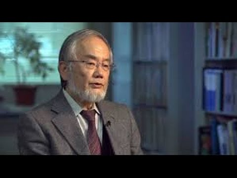 Yoshinori Ohsumi of Japan Wins Nobel Prize in Medicine