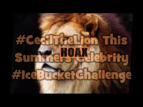 Cecil The Lion This Summers Superstar Ice Bucket Obstacle  Hoax